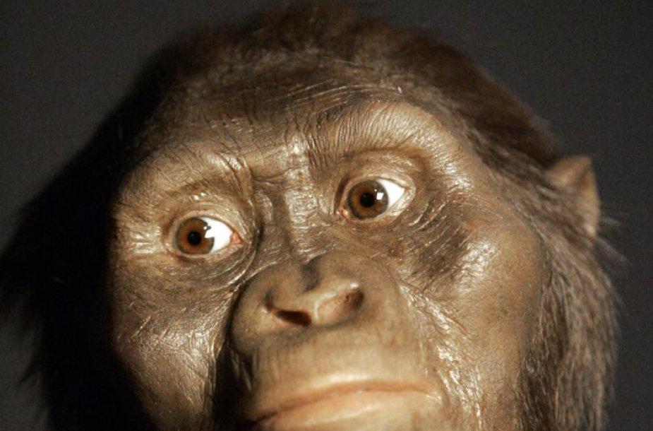 Taip galėjo atrodyti žmonių protėvė Liusi