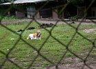 Per pusantro mėnesio – 128 tyrimai dėl nelegalaus šunų veisimo ir netinkamo laikymo