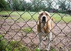 Gyvūnų globėjų priekaištai VMVT: kas iš tokių patikrinimų, jei gyvūnų nekonfiskuoja, o veiklą leidžia legalizuoti