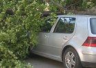 BMW vairuotojai kelią Varėnos rajone pastojo medis: sužalota keleivė
