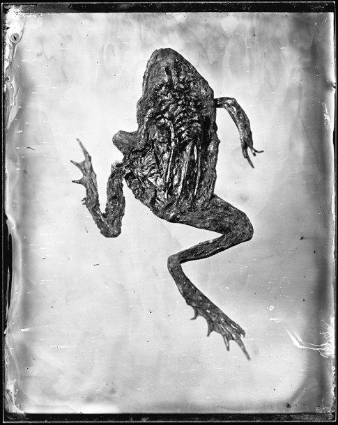 """Ginto Kavoliūno fotografija iš ciklo """"Šokis lietuje"""""""