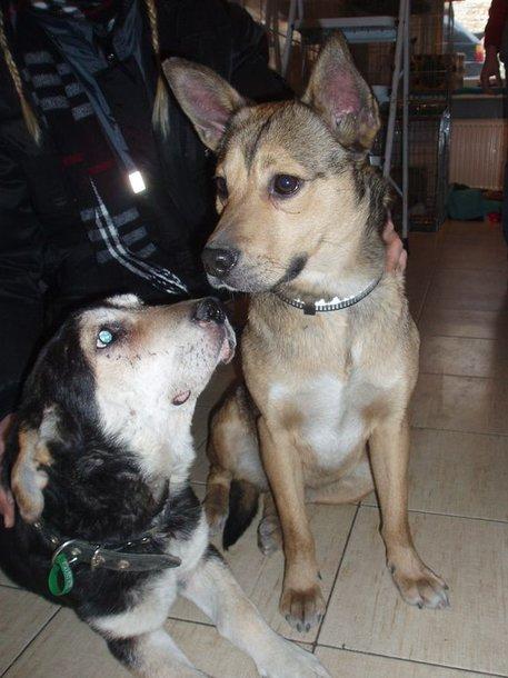 Nuo paauglių nukentėję šuneliai šiuo metu saugūs gyvūnų globėjų rankose.
