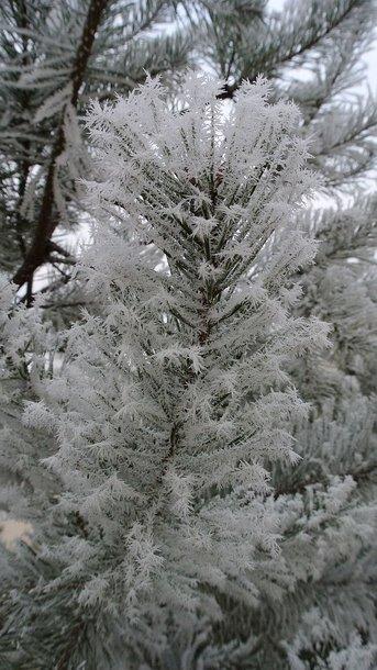 Šalčio raštai gruodžio mėnesį