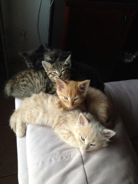 Kačiukų penketukas