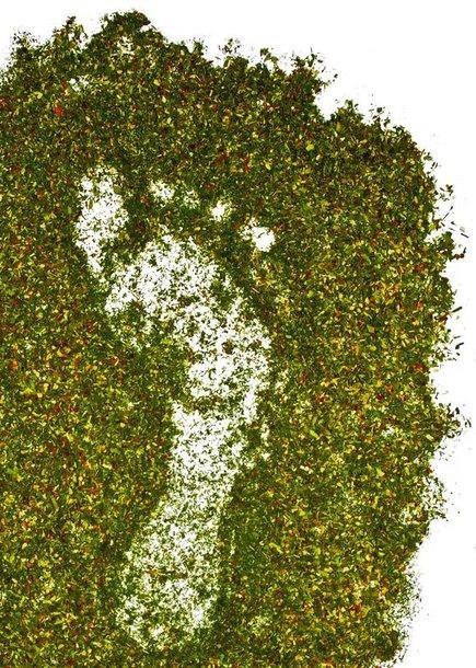 Žalias pėdsakas