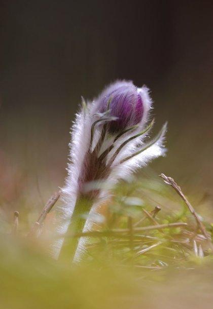 Įspūdingas grožis Nemenčinės miške – šilagelės